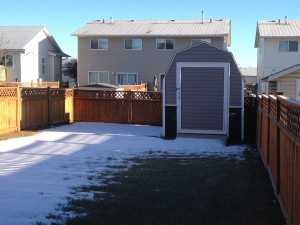 back yard (2)